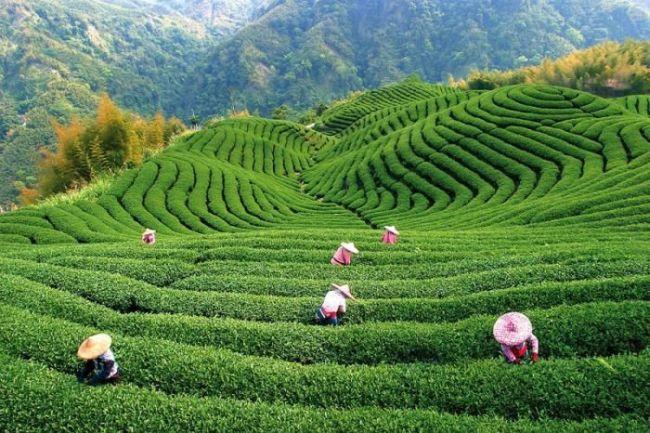 китайский чай для похудения фото упаковки